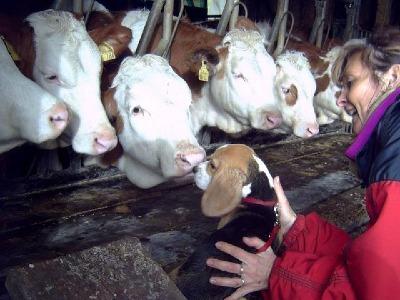 Begegnung mit einer anderen Art im Rinderstall Foto 2007